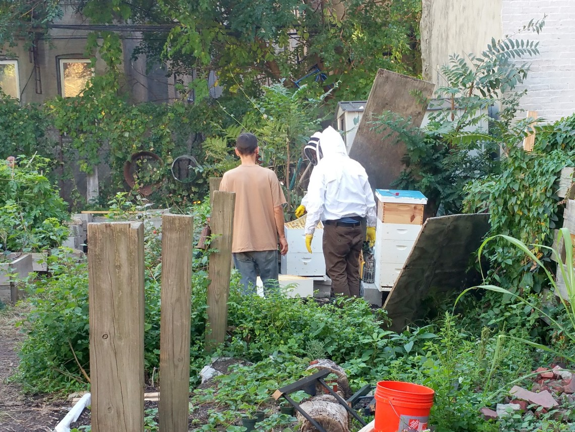 Beekeepers at 462 Halsey Garden, Bklyn