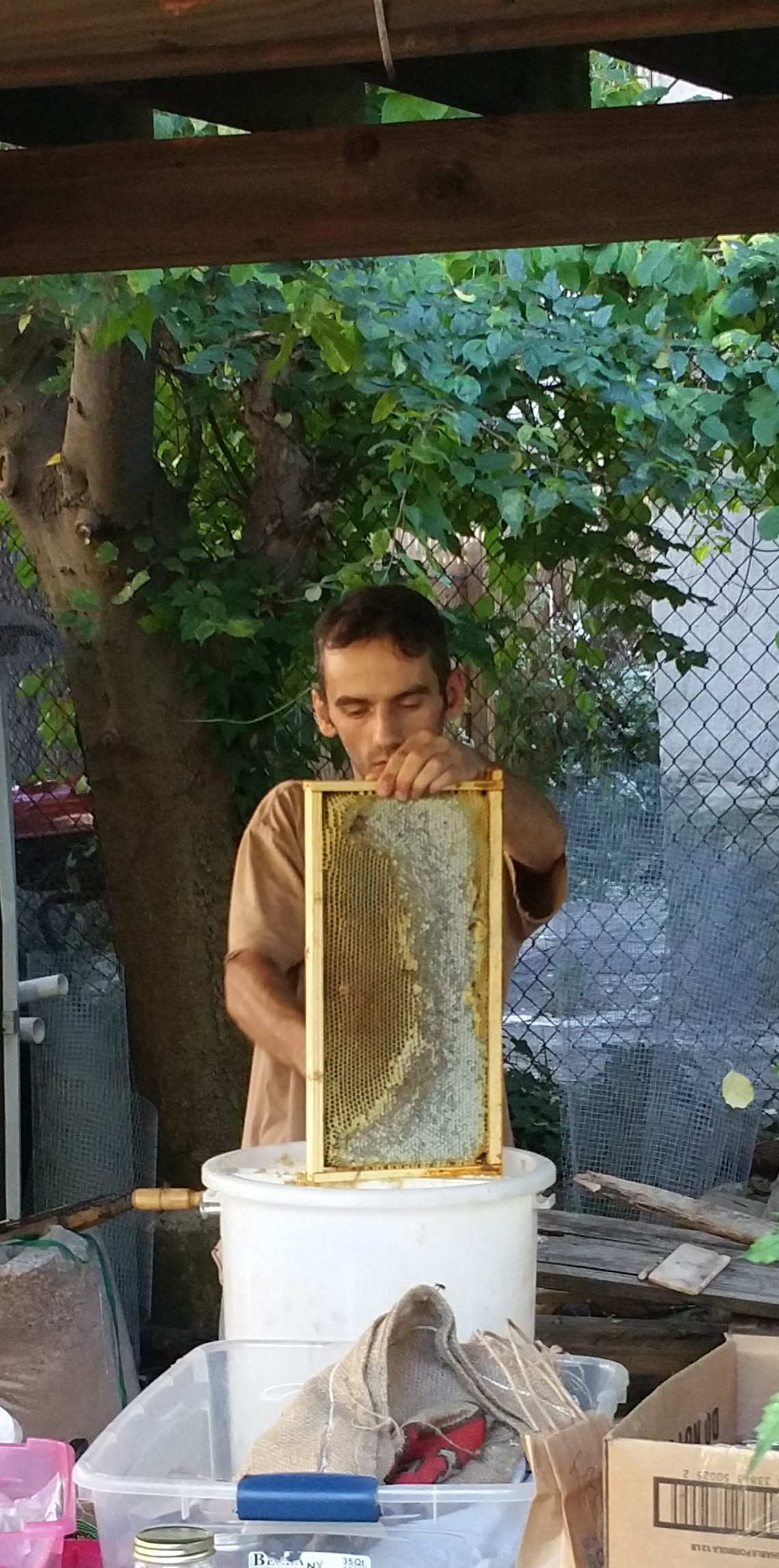 Honey collected from beehive at 462 Halsey Street Garden, Bklyn