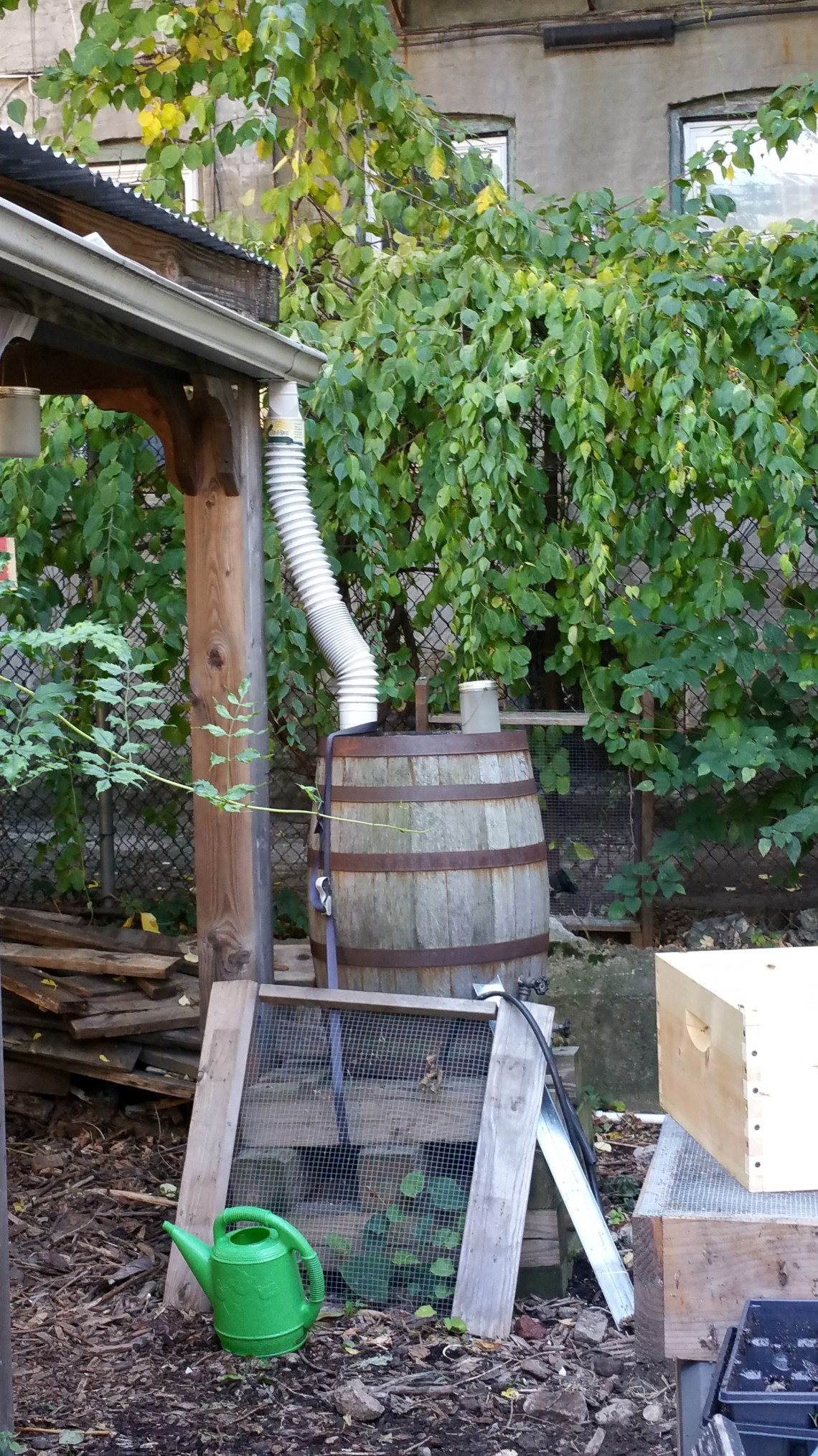 Rainwater harvesting system at 462 Halsey St Garden, Bklyn
